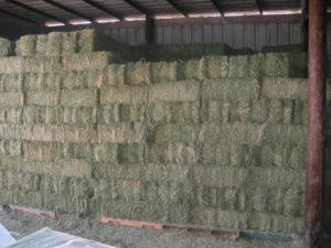 Alfalfa square bale hay