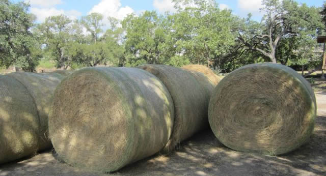 Horse Quality Round Bales at J and B Feed in Austin, TX